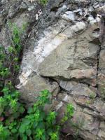 Na jižním okraji výchozu metabazaltů je pozorovatelná nápadná, několik cm silná a cca 1 m dlouhá křemenná žíla., Lucie Kubalíková, 2019