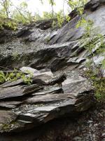 Pokrývačské břidlice v lomu Tlukačka poskytly množstvé zajímavého paleontologického materiálu., Markéta Vajskebrová, 2019