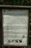 Strmá opuková stráň tvořená vápenci křídového stáří., Motyčková Kamila - Šír Jiří, 2014